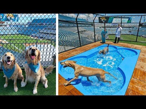 DOG PARK & POOL IN NFL STADIUM!