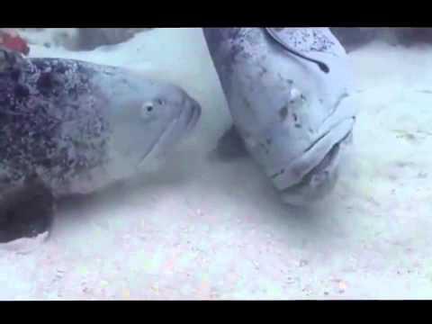 Австралия.Рыбы большого Рифа
