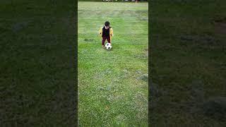 Tiger playing football