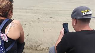 13-06-2019 -- Acapulco Zipline Tirolesa Xtasea - Baby Turtle Releas TourByvan by Rudy