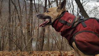 자연인과 사냥개* 猎犬