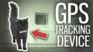 I GPS Tracked My Cats For 24 Hours