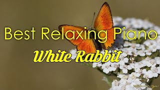 White Rabbit 🦊 Best relaxing piano, Beautiful Piano Music | City Music