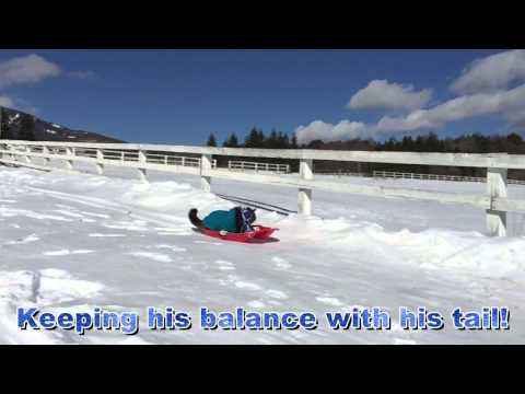Super Cat Sledding 2015