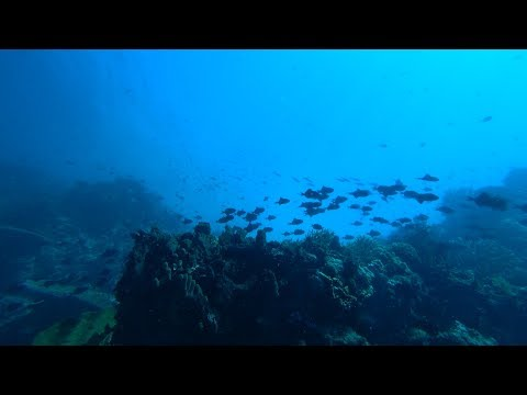 Exploring Sulawesi Diving & More (BUNAKEN, TANKOKO & LEMBEH)