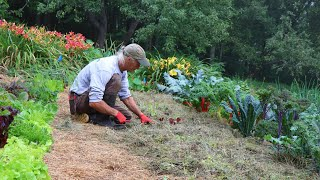 The Grass-Fed Market Garden: No Water. No Weeds. No Tilling.