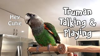 Truman Cape Parrot Talking And Playing On His Tree