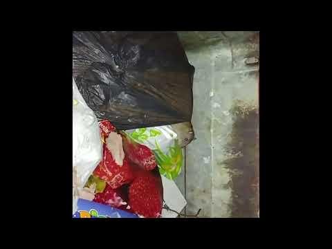 Rock Ferry Rats - Lawrence Court - Roche Ferret
