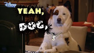 Dog With A Blog - Stan Raps! - Official Disney Channel UK HD