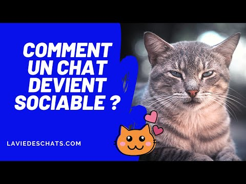 Comment Rendre Votre Chat Sociable ? 😊