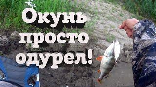 Рибалка на фідер або лящі і окуні ламають мої палиці!