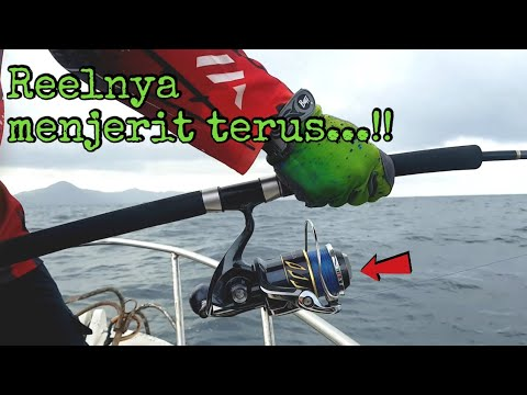 Jigging Pulau Aceh (Dogtooth)