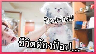 เมื่อหมาบ้าน กลายเป็นหมาข้างถนน..┇อยู่เมืองดัดจริต ชีวิตต้องป็อป!!🔥