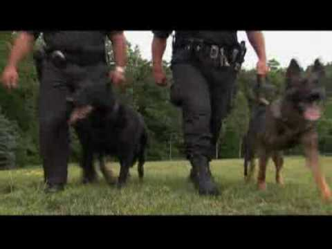 Dogs 101 German Shepherd Video Animal Planet