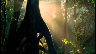 Дикая Африка 5: Джунгли. Русский трейлер.