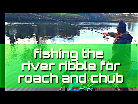 Fishing The River Ribble Targeting Roach And Chub.