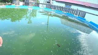 Bestway Каркасный бассейн Как из болота сделать кристальную воду