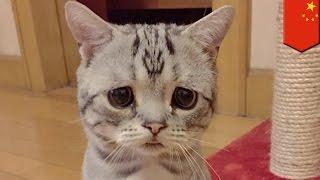 Popular Videos - Felinae & Tabby cat