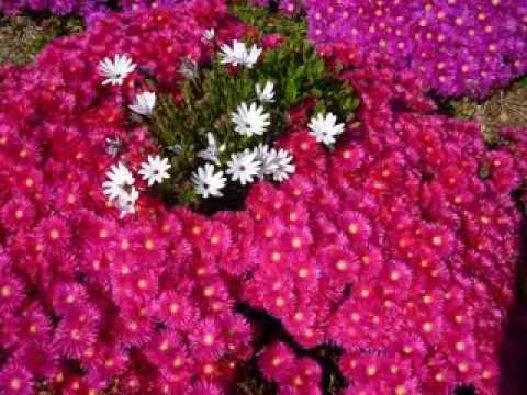 Populaire Quelques Plantes et Fleurs du Sud de la France - YouTube HN23