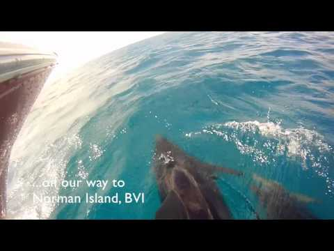 Dophins in the Virgin Islands-St Thomas Boat Rental