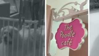 Poodle Cafe | 1g Yio Chu Kang Road | Cafes In Singapore