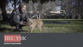 "Пёс Уик | Dog Wick (Русская озвучка) | Пародия на ""Джон Уик"""