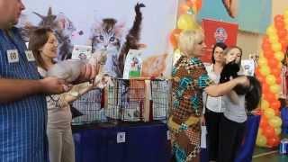 Ринг котят. Международная выставка кошек ''Осенний Блюз''