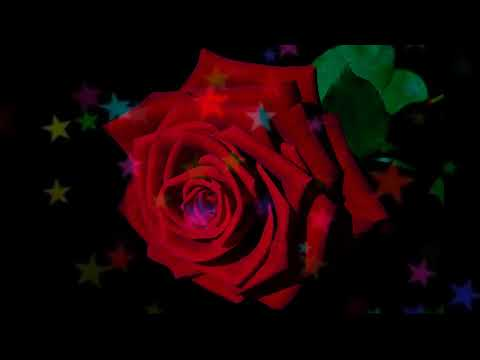 roses-dream-meaning