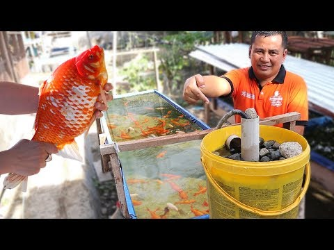 WHY DO FISH KEEPING NEEDS FILTRATION SYSTEM
