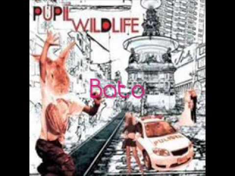Pupil (Wildlife) - Bato