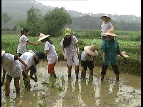 Trải nghiệm làm nông dân - TT HT & PT Thanh niên Hà Nội (hanoiadc.org.vn)