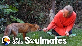 Watch How This Woman Befriended A Wild Fox | The Dodo Soulmates thumbnail