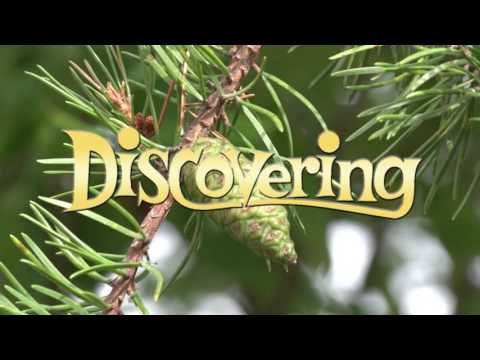 Discovering - Trees of the Upper Peninsula