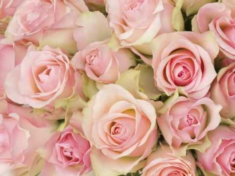 Florals by Jason Peter - (201) 750-3352