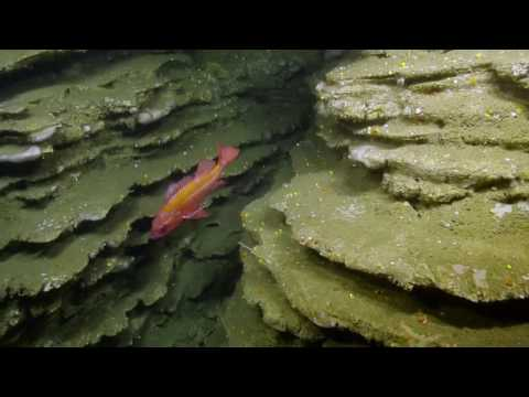"""A Geologist's Dream: Steep Cliffs, Interesting Rock Faces, and """"Layer Cakes"""" 
