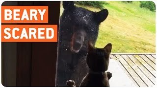 Cat Scares the S**T Out of Bear