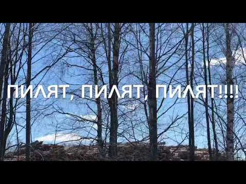 Бабаево Вологодская жизнь