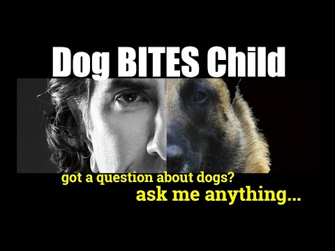 Our Dog BIT Our Grandchild - Reactive Dog Advice - Dog Training Video
