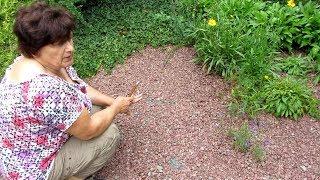 Как избавиться от любых СОРНЯКОВ в цветнике, огороде и на дорожках. Гарантия 50 лет !!!