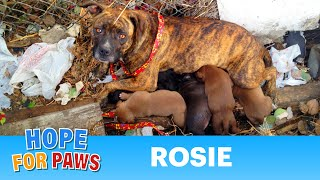 Rescuing a family of dogs with help from iPhone and You Tube...