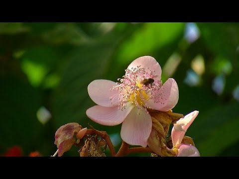 Miel de Abejas - Meliponicultura - TvAgro por Juan Gonzalo Angel