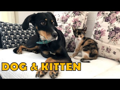 Can cats and dogs get along?