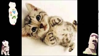 Funny Vine 2015 Animal Compilation Funny Video Comedy Funny Cat Pictures Sayings