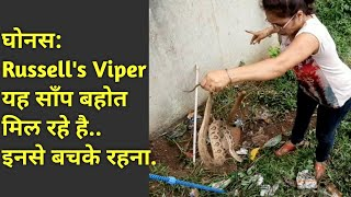 || Russell's viper: Venomous || Rescue By Lady Snake Rescuer Nirzara Chitti ||