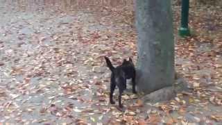 ふみこは、風に舞う葉っぱと遊んでいます。 ブログやってます。 http://...