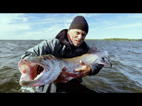 Canadian Horrors - How to Catch a Muskie