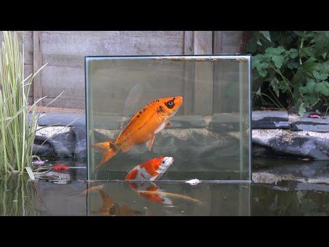 KOI FISH POND VIEWING TOWER