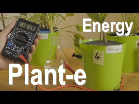 """""""Plant-e"""" energia elettrica"""