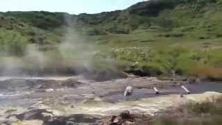 Камчатка. Долина Мутновского вулкана.Kamchatka. Mutnovsky volcano.(Kamchatka. Valley Mutnovsky volcano Видео путешествие с TVE - http://www.youtube.com/channel/UCNCCOgv2AVB-Us7CgNzc8-Q., 2009-12-27T10:07:45.000Z)