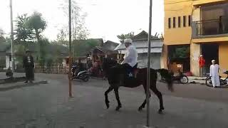 Download Video Habib Hasan bin Ismail Al Muhdor menunggang kuda MP3 3GP MP4